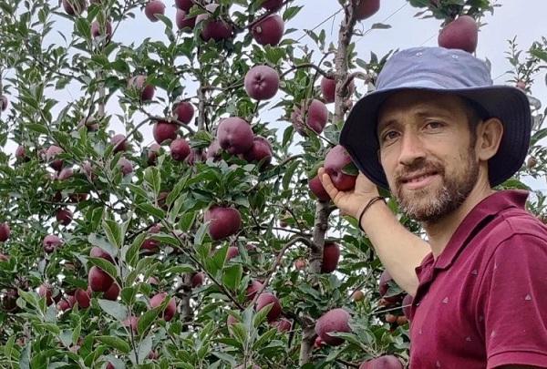 पहली बार दुबई के शेख चखेंगे हिमाचली सेब, दिल्ली से एयर कार्गो में भेजा जाएगा