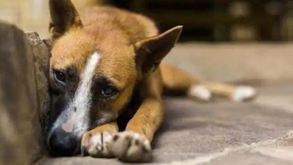 अजब: कमिश्नर साहब का कुत्ता हुआ गुम, खोजने में जुटा पूरा पुलिस प्रशासन- लाउडस्पीकर पर ऐलान कर घर-घर की जा रही तलाशी