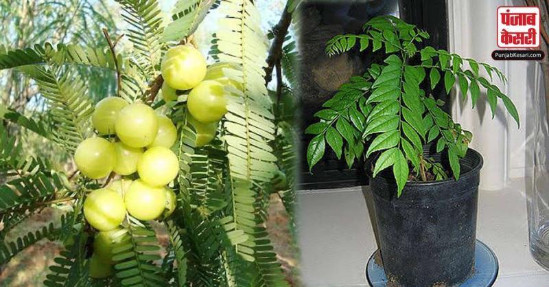 इन 6 पौधों को घर में जरूर लगाएं, कभी नहीं होगी पैसों की तंगी