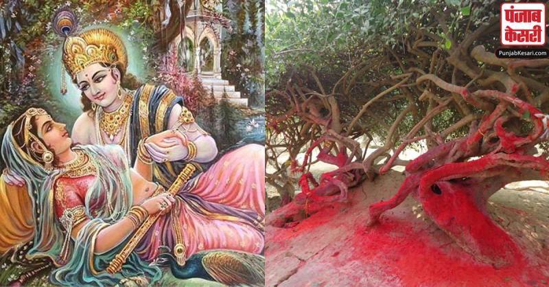 तुलसी के पौधे बनते हैं राधा-कृष्ण की रासलीला के गवाह, रात होते ही बदल लेते हैं रूप
