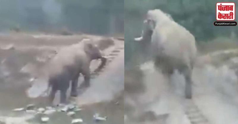 हाथी ने जब ऊपर चढ़ने के लिए सीढ़ियों का किया इस्तेमाल, समझदारी देखकर पब्लिक रह गयी दंग