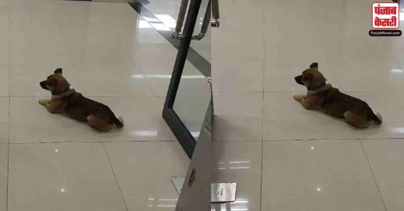 मालिक की कोरोना से 3 महीने पहले हुई मौत,लेकिन कुत्ता हॉस्पिटल अभी तक कर रहा है इंतजार