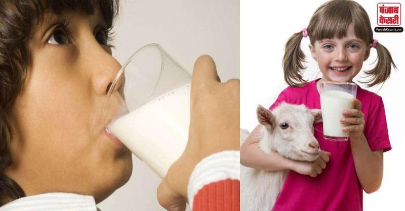 खतरनाक वायरस से बकरी का दूध बचाता है, जानिए क्या है गाय, भैंस और बकरी के दूध के फायदे