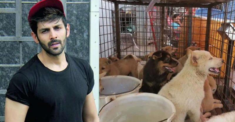 कार्तिक आर्यन, अनुष्का शर्मा ने कड़ी निंदा करी Yulin Dog Meat Festival की, कहा- कोरोना वायरस पैनडेमिक के बाद....