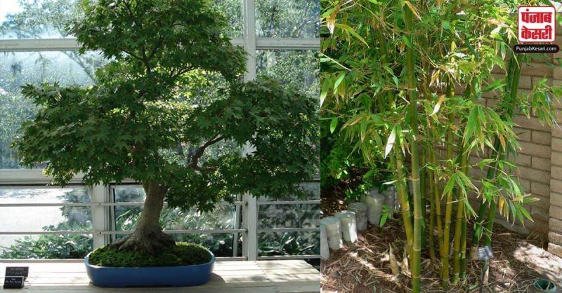 वास्तु शास्त्र के अनुसार घर में यह पौधे लगाने से आती है दरिद्रता, बना रहता है लड़ाई-झड़गे का माहौल