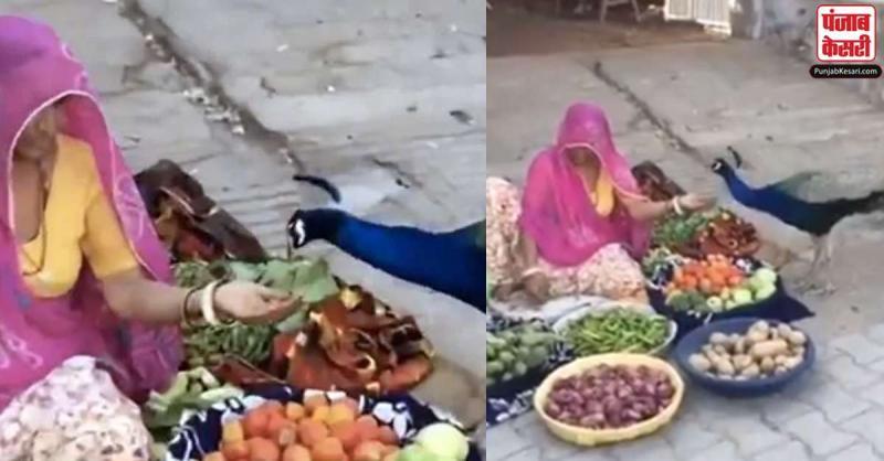 सब्जी बेचने वाली  इस महिला ने अपने हाथों से ऐसे खिलाया मोर को खाना,बड़ा ही प्यारा है वीडियो