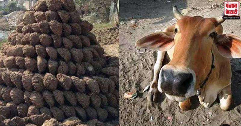चोरों की अंधेरगर्दी,सोना-चांदी छोड़ आधी रात को किसान के घर से चुराया 100 किलो गोबर