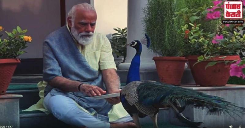 एक बार फिर दिखा PM मोदी का प्रकृति प्रेम, मोर को दाना खिलाते हुए साझा किया Video
