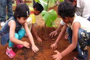 पौधों को बचाने के लिए हर संभव उपाय करें