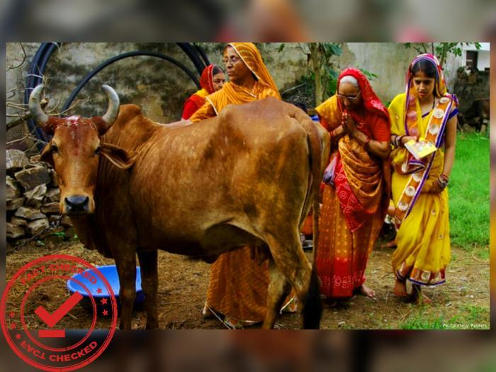 Can Cow Urine and Dung Cure Coronavirus? Read To Know