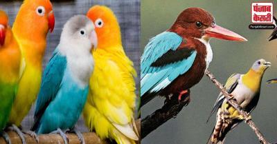 अगर आपको भी इस तरह से पक्षी सपने में दिख जाए तो समझ जाएं सभी परेशानियां हो जाएंगी खत्म