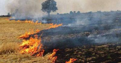 UP में पराली जलाने की समस्या एक-तिहाई से भी कम, सरकार से नाराज किसानों ने दी आंदोलन की चेतावनी