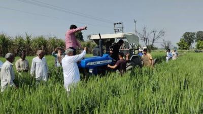हरियाणा: कृषि कानूनों के विरोध में किसानों ने गेहूं की खड़ी फसल पर चलाया ट्रैक्टर