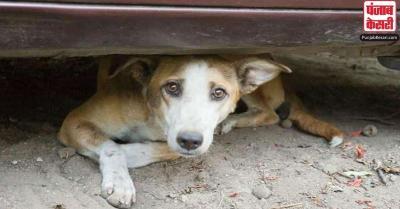 शर्मनाक! महाराष्ट्र में लावारिस कुत्ते को जिंदा किया आग के हवाले, अज्ञात के खिलाफ मामला दर्ज