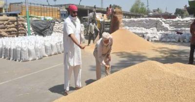 पंजाब ने 125 मीट्रिक टन गेहूं की खरीद कर किसानों को 21,472 करोड़ रूपए का किया भुगतान