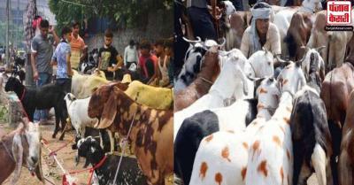 BMC ने बकरीद पर कुर्बानी वाले पशुओं की संख्या सीमित करने का किया फैसला, बंबई HC ने दखल से किया इंकार