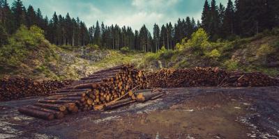 Deforestation. Photo: CodiePie/flickr