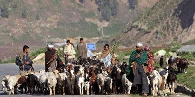 Bakerwals walk with their livestock in Sonamarg, Jammu and Kashmir. Photo: Reuters