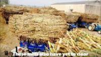 How #Punjab sugarcane farmers' dharna cost the govt Rs 230 crore?