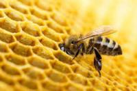 Attacked by bees; six people stung amid heavy traffic