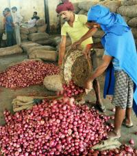Export incentive on onion doubled to shore up prices, boost shipments