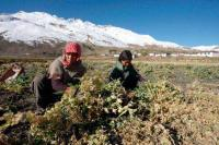 Growth in agri sector sees downward trend in state
