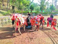State govt takes lead in setting up cow sanctuary