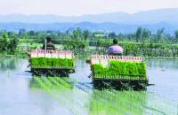 Get 50% subsidy on paddy transplanter
