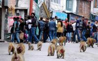 State seeks nod for killing monkeys in 91 tehsils