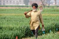 Crop registration in Haryana