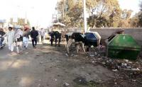 Garbage, stray cattle cast a shadow on Maghi charm