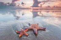 Starfish, jellyfish to benefit from climate change: Study
