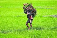 Farming beyond cow dung