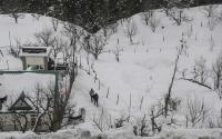 Intense cold wave in Himachal, more snow likely