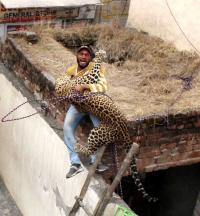Shocking visuals, as leopard spotted in Jalandhar house, attacks bystanders