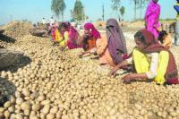 Punjab announces freight subsidy for potato growers