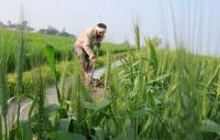States asked to quickly identify small farmers for income support scheme