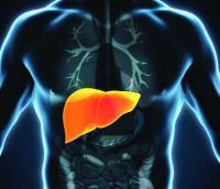'Lab-grown liver' raises hopes for acute liver failure patients