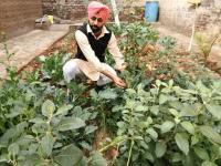 Farmer turns kitchen garden waste into manure in Muktsar