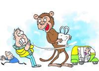 Monkeys monkey around as MC awaits wildlife nod