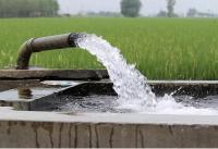 धान की फसल के लिए निकाला जाता बेहिसाब पानी भविष्य में खतरे का संकेत