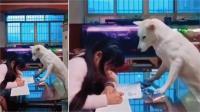 बच्ची का होमवर्क कराता है कुत्ता, देखें वीडियो
