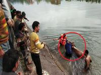 सुंदरनगर में युवकों ने नहर में डूबते बैल की बचाई जान (Watch Video)
