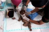 बदमाशों ने बेजुबान के शरीर में दाग दीं 74 गोलियां, ऑपरेशन दौरान रो पड़े डॉक्टर