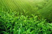 ईरान को चाय निर्यात में दिख रही ताजगी, बढ़ी उम्मीद