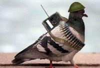 नापाक पाक की करतूत : एलओसी पर सन्देश लिखकर भेज रहा कबूतर