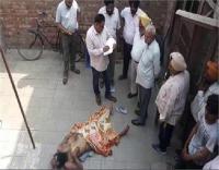 बुजुर्ग को बेरहमी से उतारा मौत के घाट