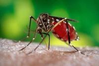 राष्ट्रीय डेंगू दिवस डेंगू का समय पर इलाज करना जरूरी