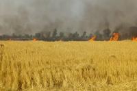 गेहूं के अवशेष जलाने वाले 255 किसानों की हुई पहचान, वसूला जाएगा जुर्माना