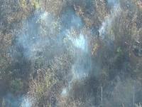 जंगल में भड़की आग से लाखों की वन संपदा राख, जिंदा जले कई जीव-जंतु(Video)